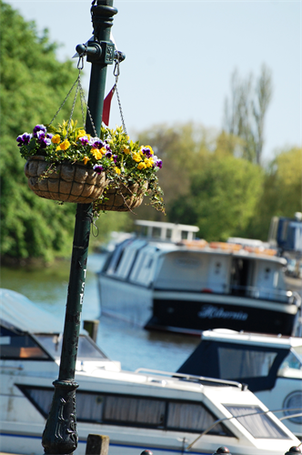 henley riverside and flowers